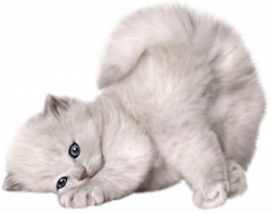 Cats png free images, download
