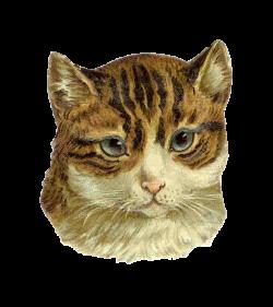 Antique Images: Free Cat Clip Art: Antique Die Cut from Victorian ...