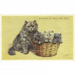 Mabel Gear Vintage Valentine and Sons Postcard of Mother Cat and ...