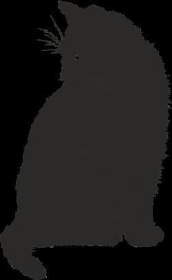 cat-2074514_960_720.png (443×720) | Royalty Free: Shadows ...