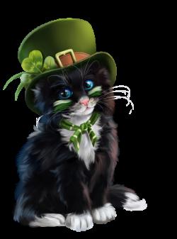chatons,chats,cat,gato,Katze,katter,kettir,cait,   Kot Clipart / Cat ...