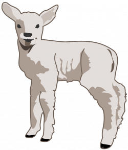 Lamb Image - Cliparts.co