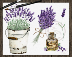 Watercolor Lavender Clipart Vintage Lavandula Clip Art Flower Purple Rustic  Wedding Invitation Illustration Wreath Pitcher Bucket Oil Dried
