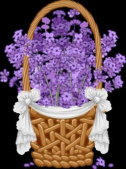 Floral vintage background with lavender (3) [преобразованный].png ...