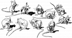 10 line-drawings of a mouse washing itself in various positions ...