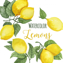 Watercolor Lemon Clip Art Trendy Lemon leaves Clipart Lemons