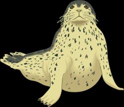 Spotted Seal Clip Art at Clker.com - vector clip art online, royalty ...