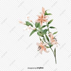 Elegant Lily, Elegant, Lily, Hand Painted PNG Transparent ...