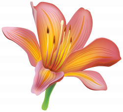 Lily Flower PNG Clipart | flowers | Pinterest | Flower and Flowers