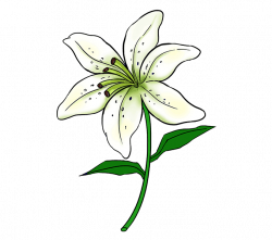 Lilies Flower Drawing at GetDrawings.com   Free for personal use ...