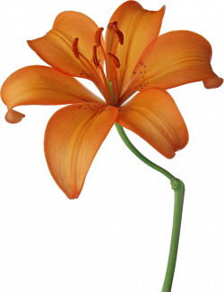 dibujos primavera png - Buscar con Google | FLOWERS | Pinterest ...