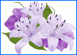 Fascinating Best Liliaceae Lily Family Illustrations Pics Of ...