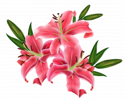 Red Lilium PNG Clipart Picture | flowers | Pinterest | Lilium and ...