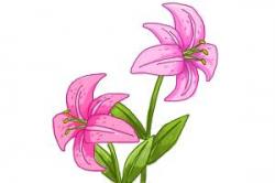 Free Stargazer Lily Cliparts, Download Free Clip Art, Free ...