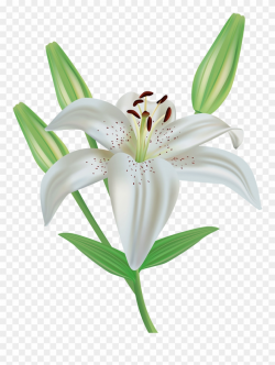 Orange Flower Clipart Stargazer Lily - White Lily Flower ...