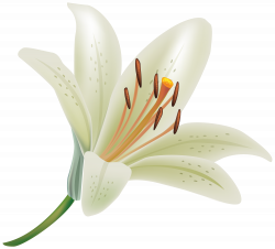 Pin by Lily Webster on Tat ideas | Pinterest | White lily flower ...
