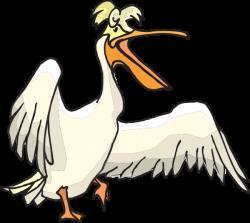 19 Pelican clipart HUGE FREEBIE! Download for PowerPoint ...