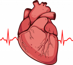 Pin by Paola Williams on Cardiology | Pinterest | Cardiology