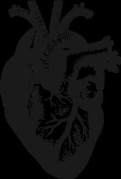 OnlineLabels Clip Art - Anatomical Heart