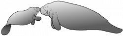 Manatee Clipart on Behance