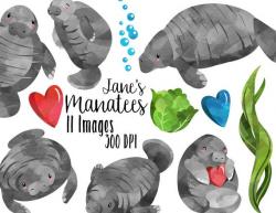 Watercolor Manatees Clipart - Sea Creatures Download - Instant Download -  Watercolor Cute Happy Manatees