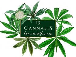 Cannabis Clipart, watercolor marijuana clipart, marihuana clip art ...