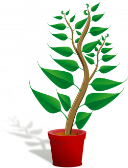 Free Free Plant Pictures, Download Free Clip Art, Free Clip Art on ...
