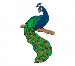 Peacock Drawing Easy at GetDrawings.com | Free for personal use ...