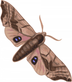File:Moth.svg - Wikipedia