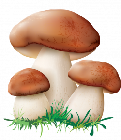 1.png | Pinterest | Mushrooms, Clip art and Embroidery