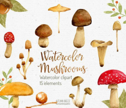watercolor mushroom clipart, woodland clipart, Watercolor ...
