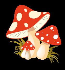 Free PNG Autumn Mushrooms | Konfest