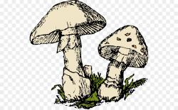 Mushroom Cartoon clipart - Mushroom, Tree, transparent clip art