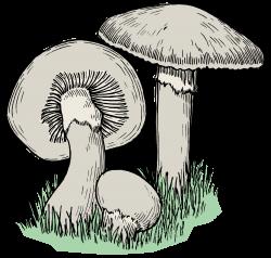 Clipart - Mushrooms - Colour
