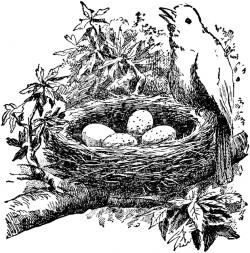 clip art birds nest   Cartoon Bird Nest Clip Art ...