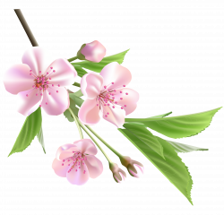 Spring flowers, Spring and Flower on Pinterest | FLOWERS | Pinterest ...
