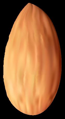 Almond Nut PNG Clipart - Best WEB Clipart
