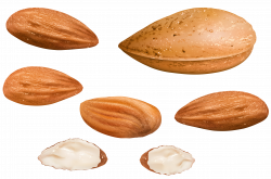Almonds PNG Clipart Image | Gallery Yopriceville - High-Quality ...
