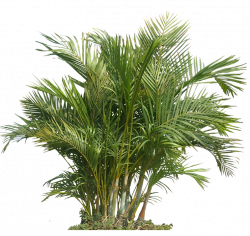 plant transparent png - Google Search | Adventure Island | Pinterest ...