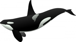 Orca clip art Free vector in Open office drawing svg ( .svg ) vector ...