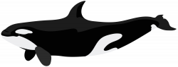 Orca PNG Clip Art Image | Gallery Yopriceville - High-Quality ...