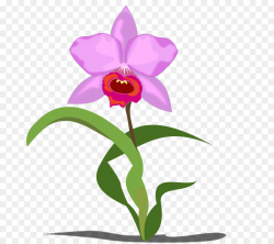 Orchids Flower Free content Clip art - Orchid Cliparts png download ...