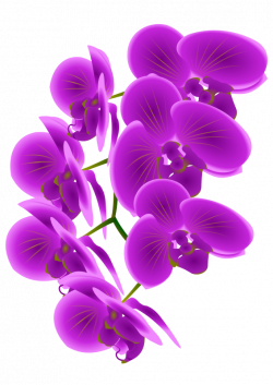 Free Orchid Cliparts, Download Free Clip Art, Free Clip Art on ...