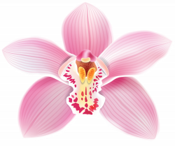 Pink Orchid PNG Clipart - Best WEB Clipart