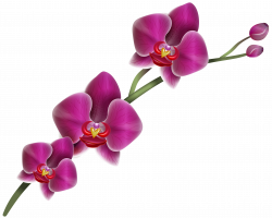 28+ Collection of Purple Orchid Clipart | High quality, free ...
