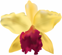 Orchid Flower Clipart at GetDrawings.com | Free for personal use ...