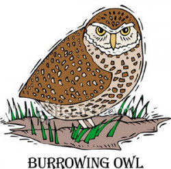 Burrowing Owl - Royalty Free Clipart Picture
