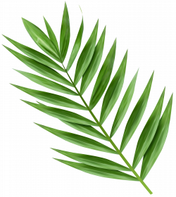 Palm Branch Transparent Image | Gallery Yopriceville - High-Quality ...