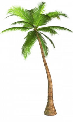 Palm Transparent PNG Pictures - Free Icons and PNG Backgrounds