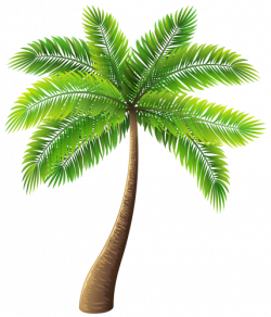 Palm Tree PNG Clip Art | Clipart and Wallpaper | Pinterest | Clip ...